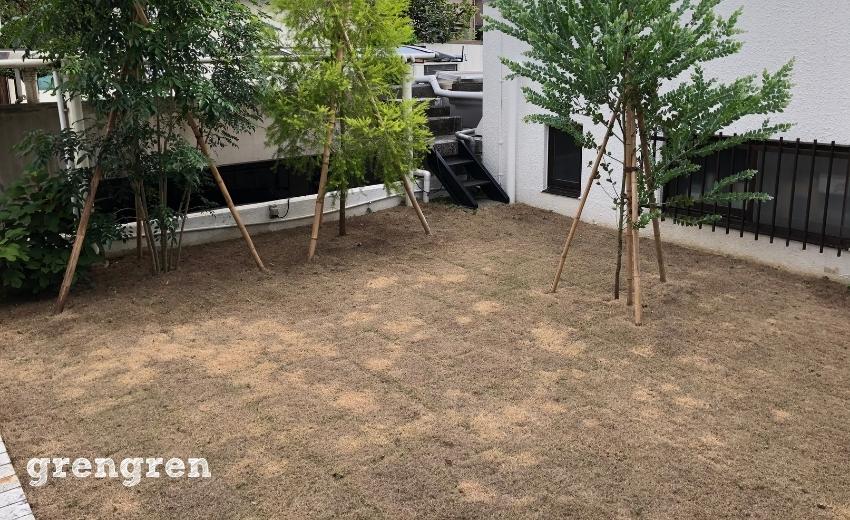 一週間で全滅した芝生TM9のお庭