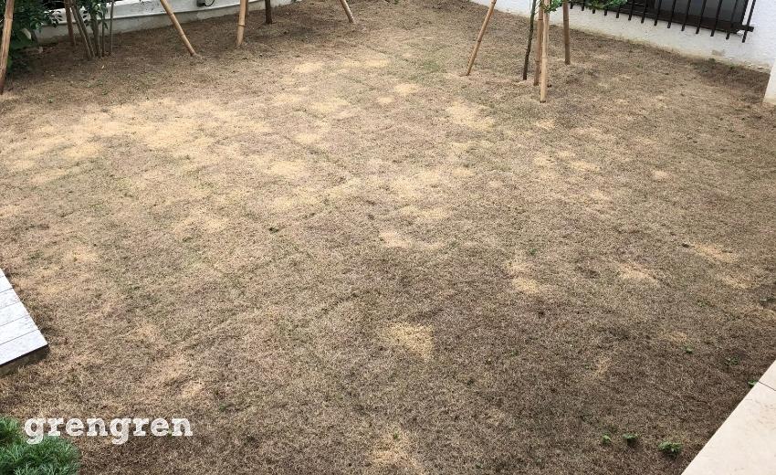害虫の被害で一週間で全滅した芝生のお庭