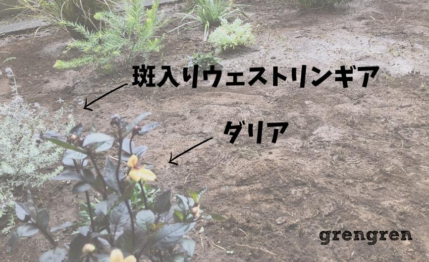 杉並区の植栽工事の植物の名前画像