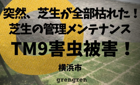 横浜市で施工した芝生TM9の害虫被害発生