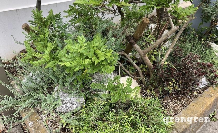 4か月前に植えこんだ植物がしっかり育ったウェルカムガーデン
