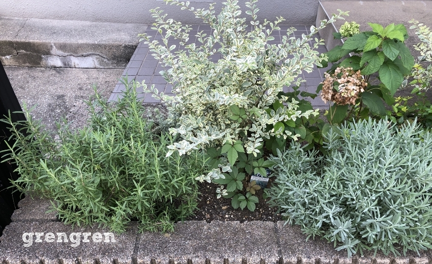 成長が著しい10月の世田谷マンションの花壇