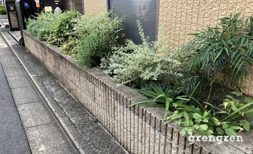 水やりを行っていないマンション花壇の管理