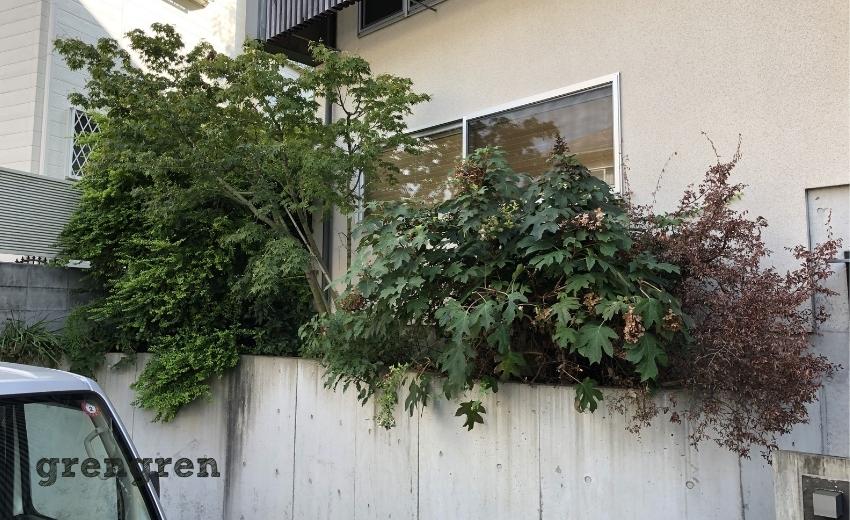 モリモリに育った道路沿いの植木