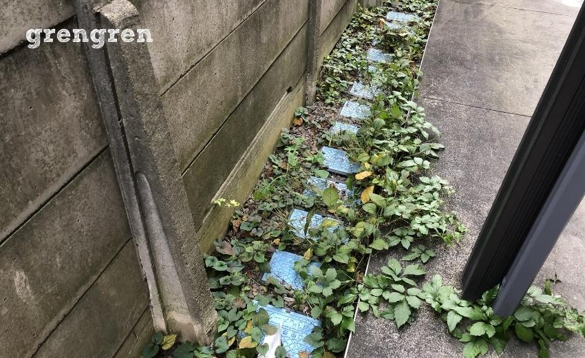 秋冬に定着した世田谷マンションの雑草の様子