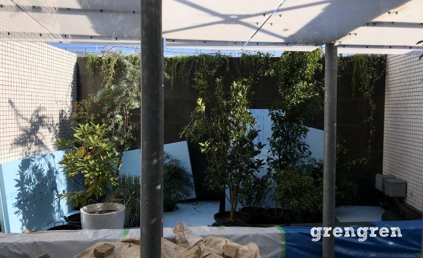 植物の配置が決まった世田谷マンションの植栽