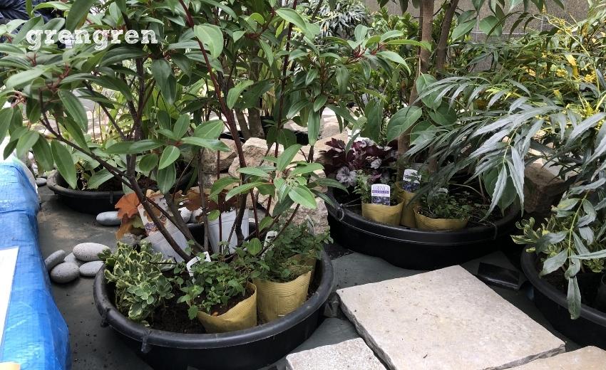 石の設置と同様に植物の植栽も進める