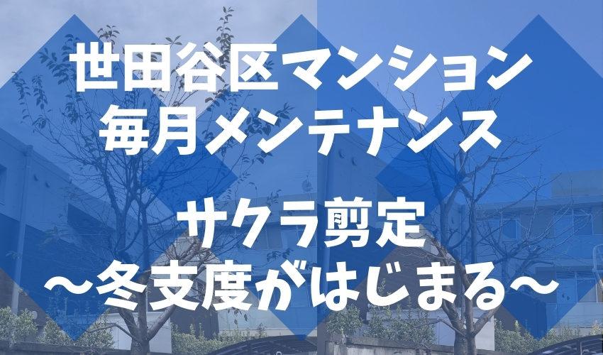 11月は桜の剪定もある世田谷区のマンションで毎月のメンテナンス