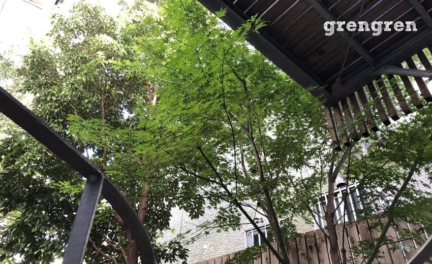 長い期間剪定管理されていない7メートルを超える高木