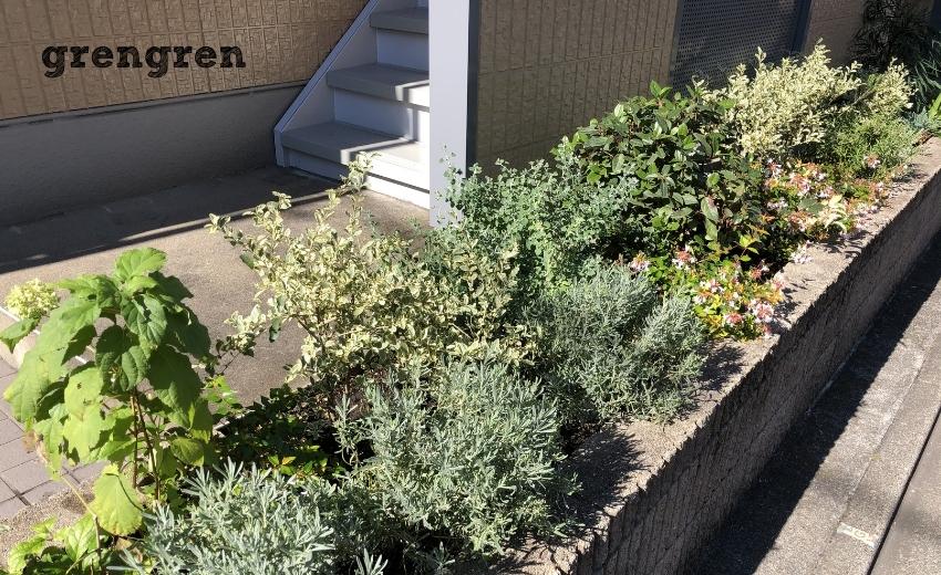 毎月剪定管理を行っている世田谷マンションの花壇の様子