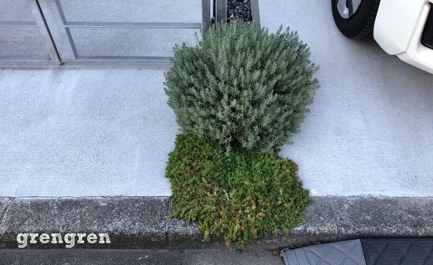 5月に植栽した狛江市の北側花壇の11月の様子