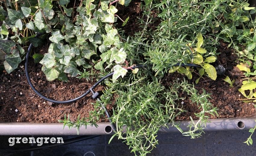 プランターの植物の水やりのための自動潅水装置を設置する