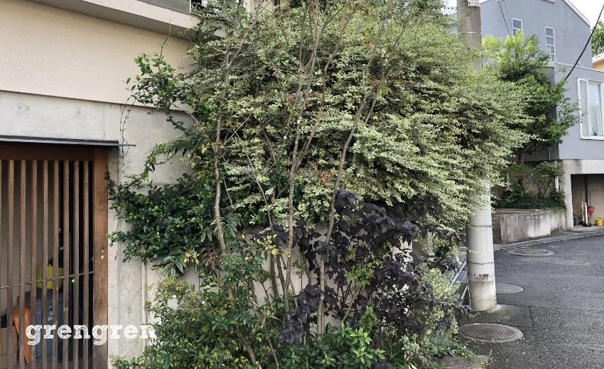 伸びきってしまったプリペットなどの樹木たち