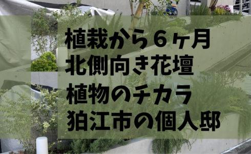 2020年5月に植栽した東京都狛江市の個人邸の北側花壇の6か月後の様子