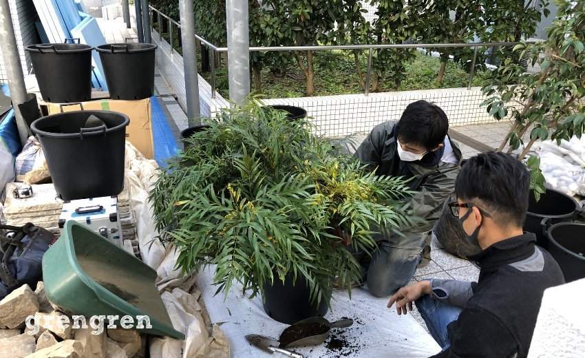 ナチュラルガーデンの庭に埋め込むプランターへの植え込み