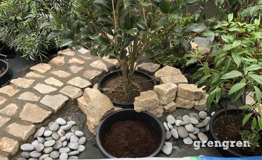 植物の隙間から見える自然石の道