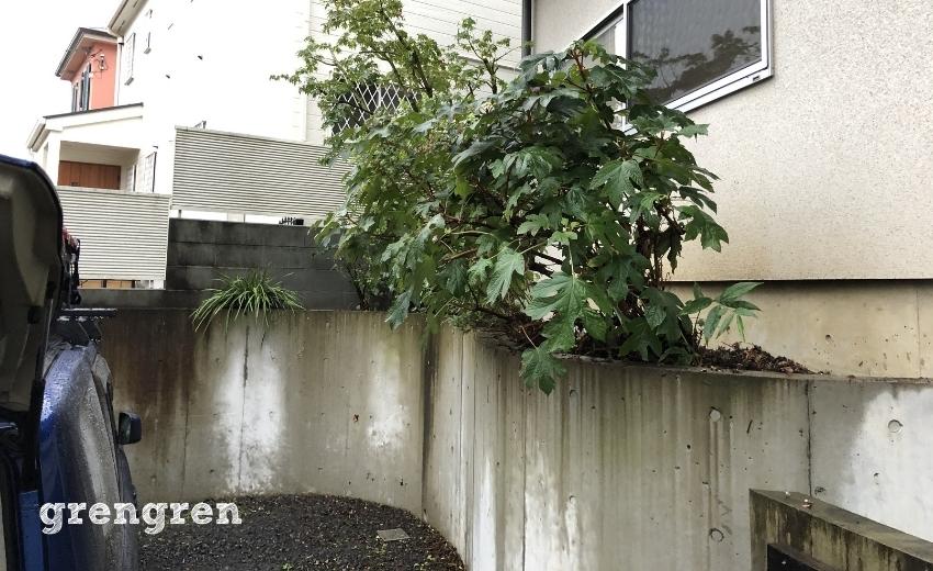 綺麗に整えられた世田谷区成城の個人邸のナチュラルガーデン