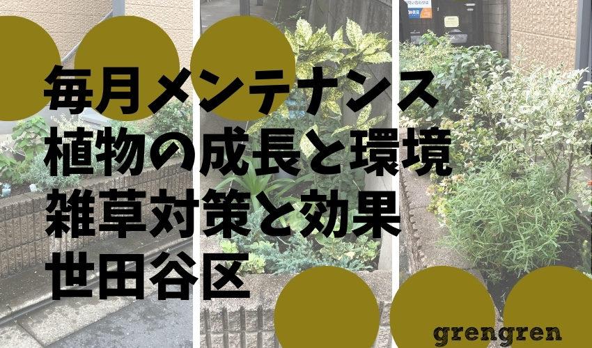 世田谷区のマンションで毎月のメンテナンスで知る植