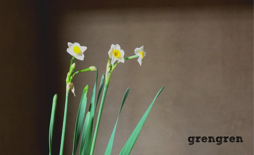 池坊目黒教室で何回もチャレンジしている花材の水仙