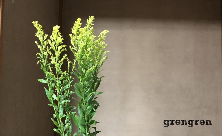 池坊東京支部のための自由花の練習で使うソリダコ