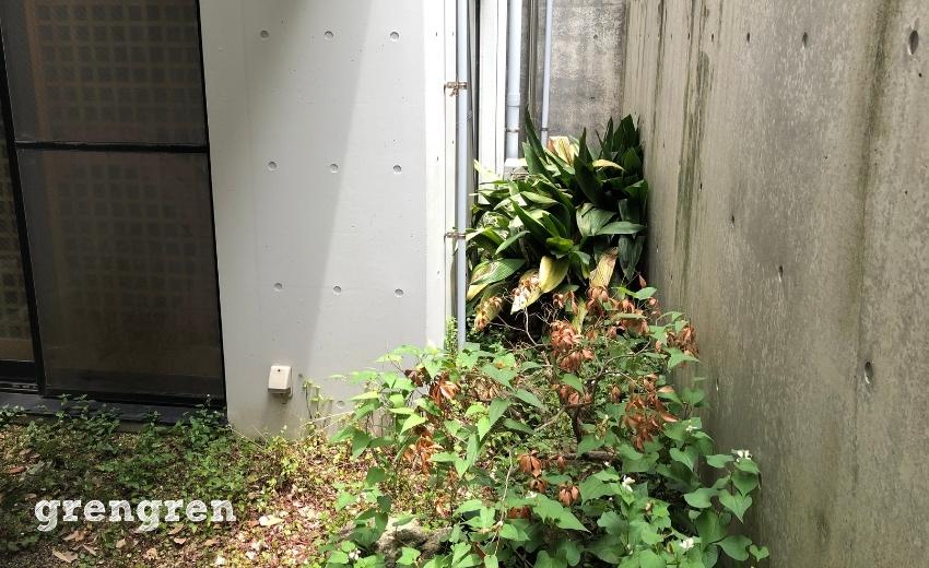 荒れ果てた世田谷区の個人邸の1階の中庭