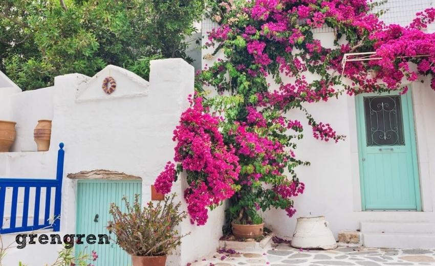 ブーゲンビリアが満開になったギリシャの観光地の風景