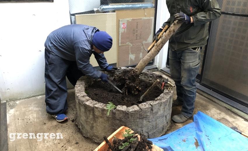虫だらけになった良くない環境の中の樹木の伐根作業