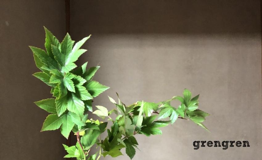 個性的な葉っぱと枝が印象的な植物