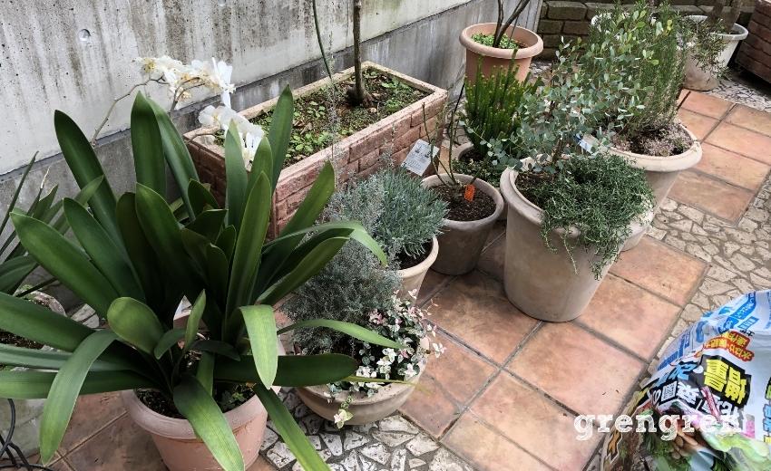 どの鉢植えに植物を入れるのか考慮するための鉢植グループ