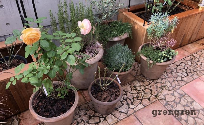 移動可能な鉢植えでお庭づくり