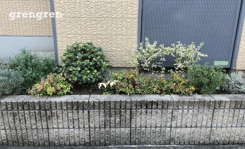 冬を迎えて成長が止まった世田谷区のマンションの花壇