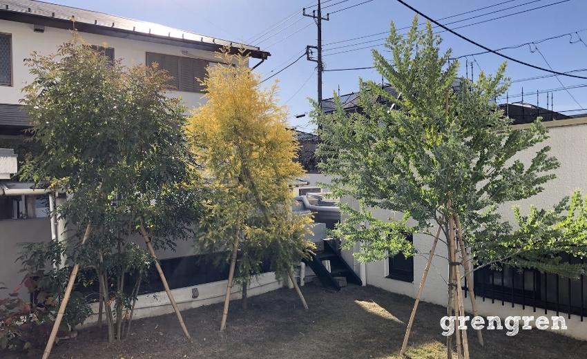 2020年5月に植え込みした横浜の庭の樹木