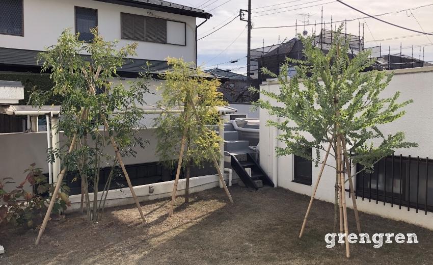 12月に剪定を行った2020年5月植えこんだ横浜の庭の樹木たち