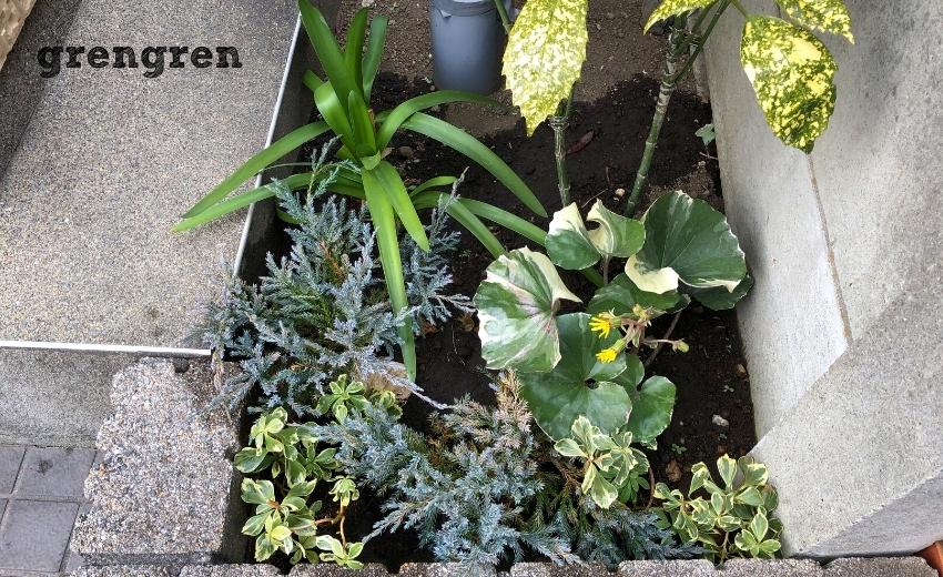世田谷のマンションの完全日陰の場所の花壇植栽