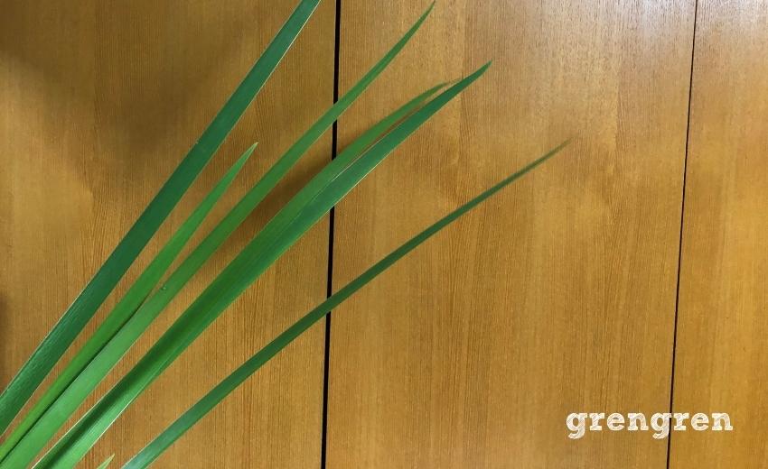 緑のラインが素敵なオクラレルカ
