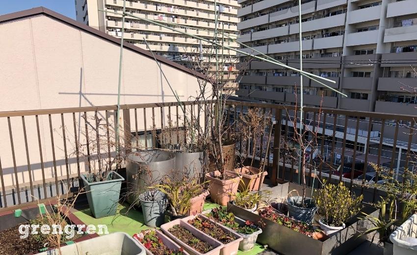 古いプランターで埋まっている大田区の屋上ガーデンの一角