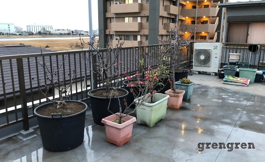 移植などを行った大田区の屋上庭園の果樹エリア