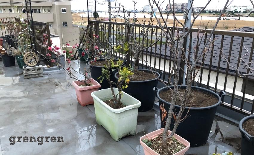 移植された大田区の屋上庭園の果樹