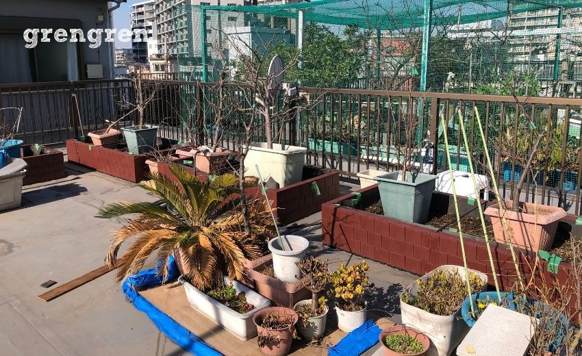 植物とプランターであふれかえった屋上ガーデン