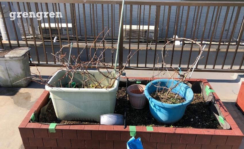 パーゴラを作って誘引するつる性の果樹