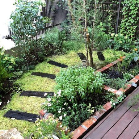 植栽庭づくりから一年後の世田谷ガーデンの様子