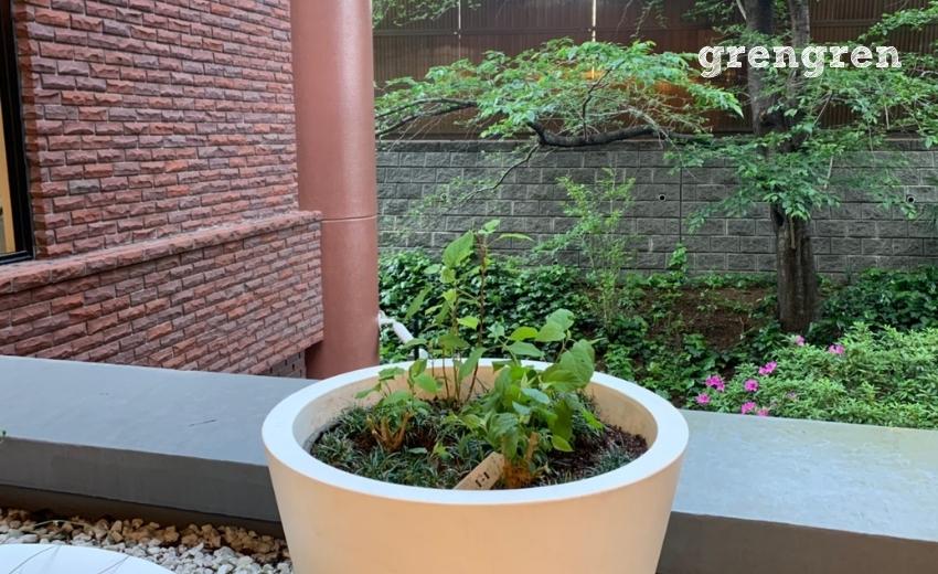 植栽されたアナベルの苗
