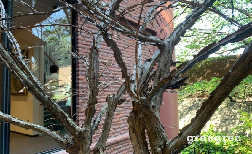 ニシキギの特徴であるヒレがついた樹皮
