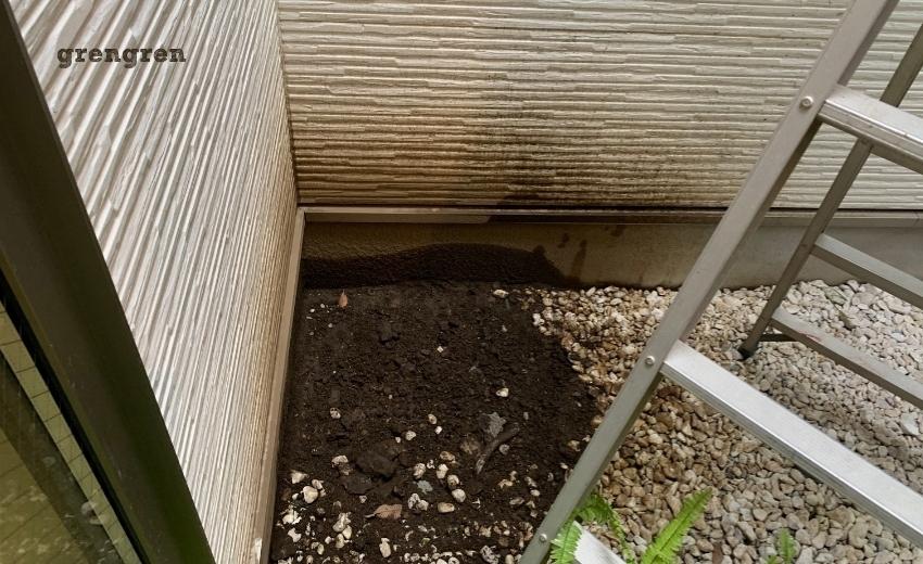 中庭に土を入れてほっといた