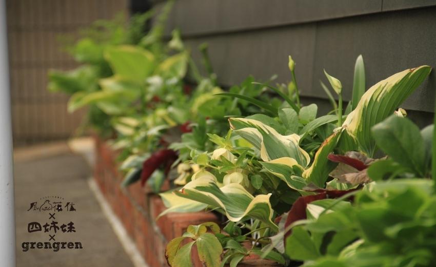 風姿花伝の八王子ガーデンのお庭づくりの植栽