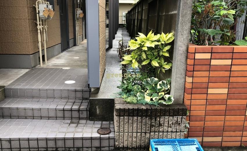 日陰植物、花壇