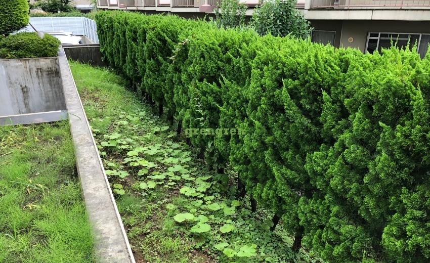 生垣と雑草の対処