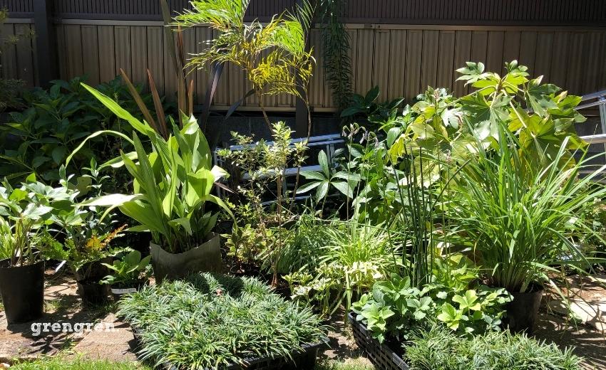 和モダンの玄関アプローチのための和の植物