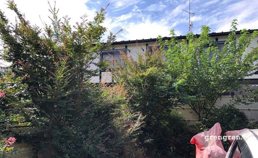 夏に開花する人気の樹木サルスベリの剪定前樹形