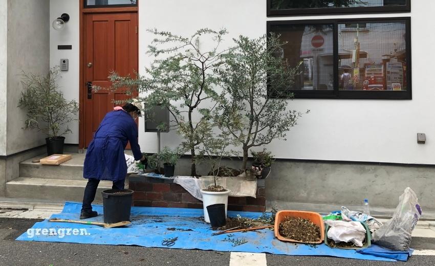 世田谷区の個人邸でオージープランツを植栽する